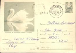 74396- WHITE SWAN, BIRDS, POSTCARD STATIONERY, 1971, ROMANIA - Swans