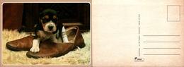 Chiot Dans Une Chaussure - Spanjersberg - Chiens