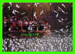 KUNMING, CHINE - PEOPLE AND SEAGULLS, SHARING LOVE FOR NATURE, GREEN LAKE - - Chine