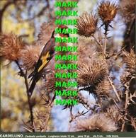 Fotografia CARDELLINO Specie Comuni Protette Della Puglia Con SCHEDA ILLUSTRATIVA (195x195mm) - PERFETTA - Altre Collezioni