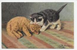 Cats - M. Stocks - Pmk Squared Circle North Tawnton - Cats