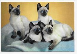 Cats - Family Foursome. - J. Arthur Dixon - Cats