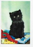 "Cat - ""A Stich In Time"". - J. Arthur Dixon - Cats"