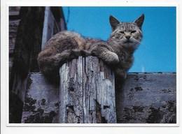 Cat - Daydreaming - Photo Paul Kuiper - Cats