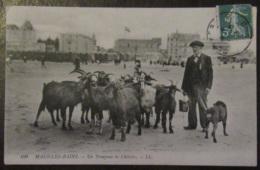 France - CPA Malo-Les-Bains - Un Troupeau De Chèvres - Carte Animée Circulée En 1909 - Malo Les Bains