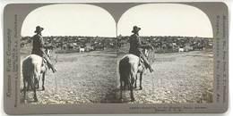 Photo Stéréoscopique - Sherman Ranch, Geneseo, Kansas, Usa ( Usa, élevage Vaches ) - Photos Stéréoscopiques