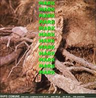 Fotografia GUFO COMUNE Rapaci Protetti Della Puglia Con SCHEDA ILLUSTRATIVA (195x195mm) - PERFETTA - Altre Collezioni