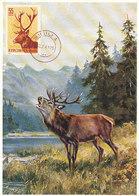 D35575 CARTE MAXIMUM CARD 1961 ROMANIA - CERF STAG HIRSCH CP ORIGINAL - Gibier