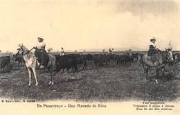 En Prouvènço - Uno Manado De Biou - Chevaux - Taureaux - Cecodi N'300 - France
