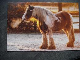 Winter, Horse, Hiver, Cheval - Tierwelt & Fauna