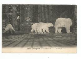 BELGIE - ANTWERPEN - Jardin Zoologique - Ours Blancs - - Antwerpen