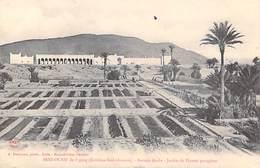 Algérie-(Bechar,Sud Oranais ) BENI OUNIF De Figuig  Bureau Arabe Jardin De Plantes Potagères (A .B  & Cie)* PRIX FIXE - Bechar (Colomb Béchar)