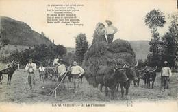 CPA En Auvergne La Fenaison Attelage Travaux Des Champs Boeufs Cheval Fourches Fourrage Foin Non Circulée - Culture