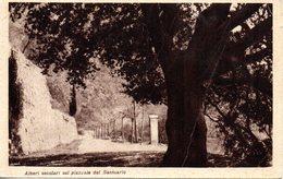 LAMPEDUSA CARTOLINA  768 - Italia