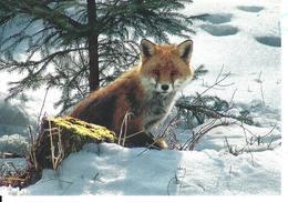 ANIMAUX RENARD FUCHS FOX - Darbellay, Martigny No 91124 - Photo Jacques Rthner - ETAT IMPECCABLE - Animaux & Faune