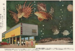 Enoshima Japan Aquarium, Fish, C1960s Vintage Postcard - Other