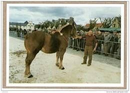 """PLOUESCAT (29) - 10-1993 - L. JOLIVET, ET SA POULICHE """"CELINE"""" 3 ANS - CONCOURS AGR. DE LA ST. LUC- 400 EX. -  ETAT NEUF - Horses"""