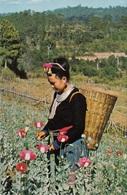 Nord Tailandia  Meo Hill Tribe GirlOpium Poppy  Etnia Hmong - Asia