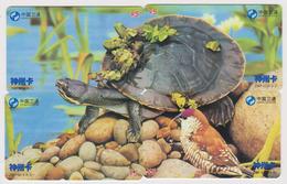 PUZZLE De 4 Télécartes De Chine - Animal - TURTLE Phonecards - SCHILDKRÖTE - 140 - Puzzles