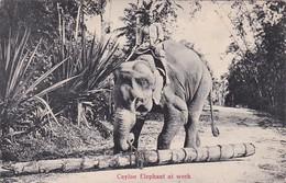Elephants Ceylon Elephant At Work - Elephants