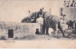 Elephants An Elephant Fight - Elephants