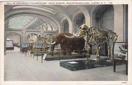 Elephants Hall Of Vertebrate Paleonthology State Museum Education Building Albany New York Curteich - Elephants