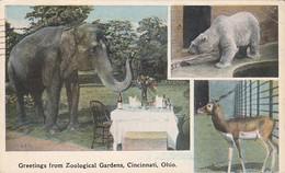 Elephants Greetings From Zoological Gardens 1922 Cincinnati Ohio - Elephants