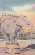 Elephants Trained Elephant - Elephants