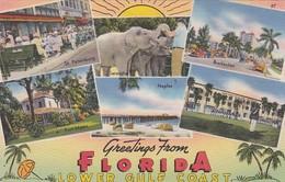 Elephants Greetings From Florida Lower Gulf Coast - Elephants