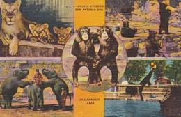 Elephants Animal Kingdon San Antonio Zoo Texas 1945 - Elephants