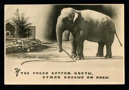 Moscow, The Circus Corner Of Durov Elephant That Grew Flowers Around. 1957 - Elefanti