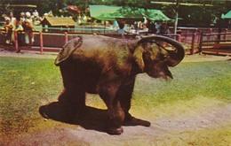Elephants Baby Elephant Children's Zoo Brookfield Illinois - Elephants