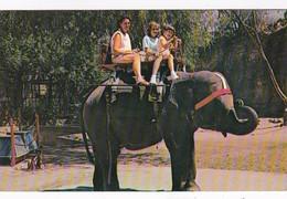 Elephants Elephant Ride San Antonio Zoo & Aquarium Texas - Elephants