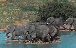 Elephants African Wildlife Tanzania 1966 - Elephants