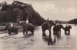Elephants Tame Elephants Bathing Ceylon Real Photo - Elephants