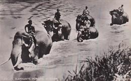 Elephants Fording A River Ceylon Real Photo - Elephants
