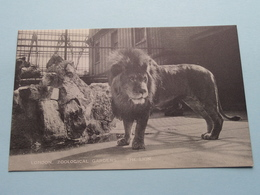 The LION ( London ZOOLOGICAL Gardens ) Anno 19?? ( See Photo ) ! - Lions