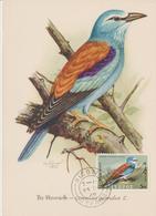 Chypre Carte Maximum Oiseau 1960 Rollier 314 - Chypre (République)