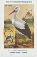Somalie Italienne Carte Maximum Oiseau 1959 Cigogne 268 - Somalie