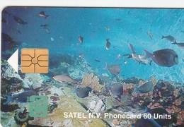 Saba - Marine Life - Antilles (Netherlands)