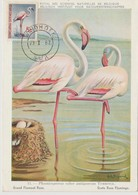 South West Africa Carte Maximum Oiseau 1962 Flamant Rose 270 - Timbres