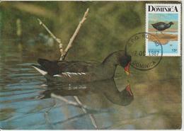 Dominique Carte Maximum Oiseau 1987 Poule D'eau 934 - Dominique (1978-...)