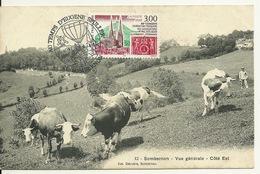 21 - SOMBERNON / VUE GENERALE Côté EST - VACHES AU PATURAGE - France
