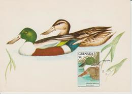 Grenada Carte Maximum Oiseau 1988 Canard 1563 - Grenade (1974-...)