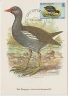 Montserrat Carte Maximum Oiseau 1984  Yv 537 - Montserrat