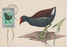 Sainte Lucie Carte Maximum Oiseau 1976 Yv 394 - St.Lucie (1979-...)