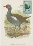 Sainte Lucie Carte Maximum Oiseau 1976 Yv 394 - St.Lucia (1979-...)