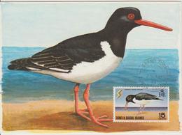 Turks Caicos Carte Maximum Oiseau 1971 Huitrier 234 - Turks And Caicos