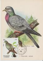 Sharjah Carte Maximum Oiseau 1972 Pigeon - Schardscha