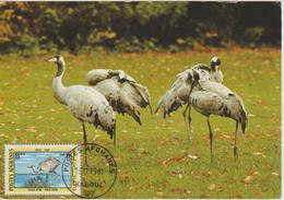 Afghanistan Carte Maximum Oiseau 1974 Grue 1002 - Afghanistan
